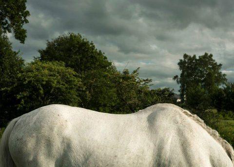 Gracefield Arts Centre: Zoe Childerley, Beyond the Pale