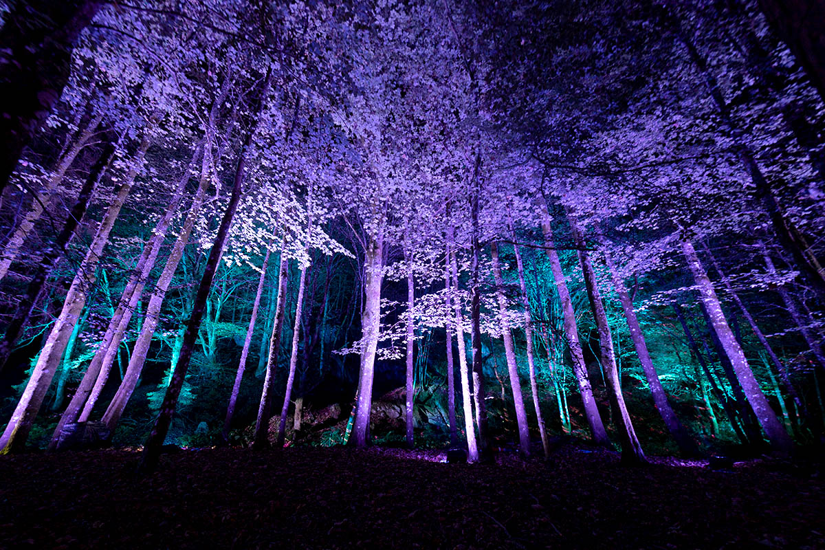 Enchanted Forest 2019